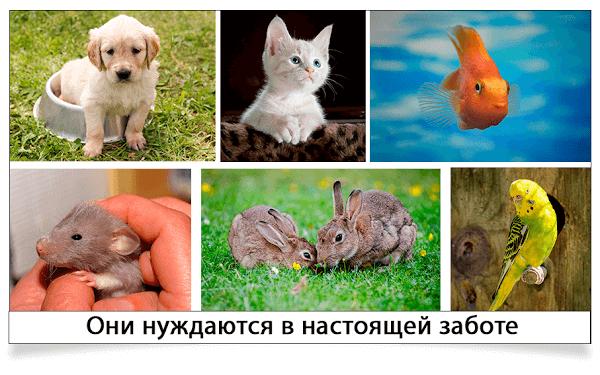 животные нуждаются в заботе