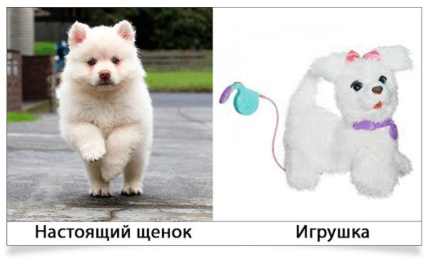 настоящий щенок и плюшевый